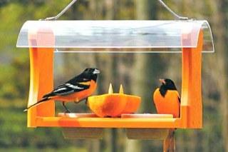 WILD-BIRDS-SPOTLIGHT