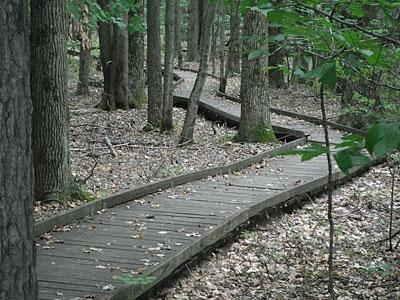 five-mile-woods