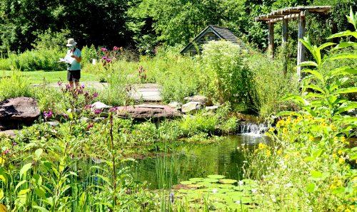 Bowman's Hill Wildflower Preserve - New Hope